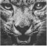 和平精英雪豹画质助手v1.3.2
